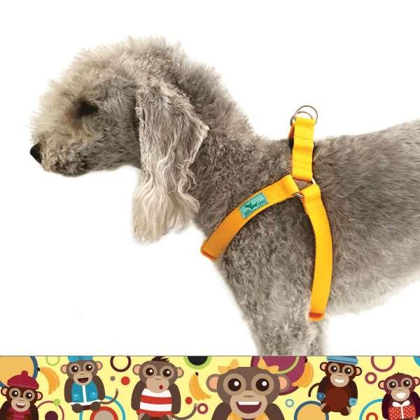 majmos kutyahám