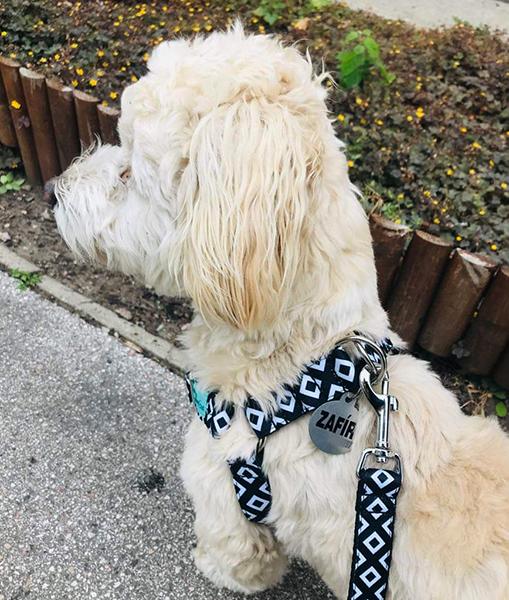 pepita fekete-fehér kutyahám