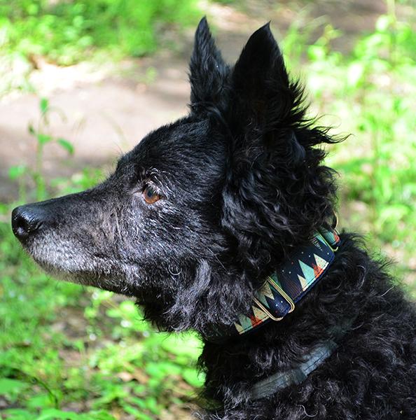 Fenyőfás kutya nyakörv