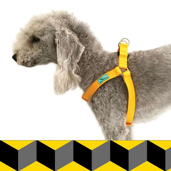 Cube dog harness