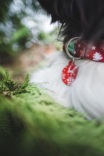 karácsonyi kutya biléta