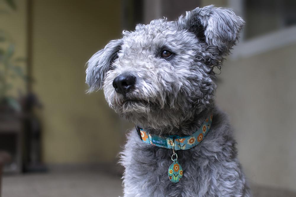 virágos kutya nyakörv