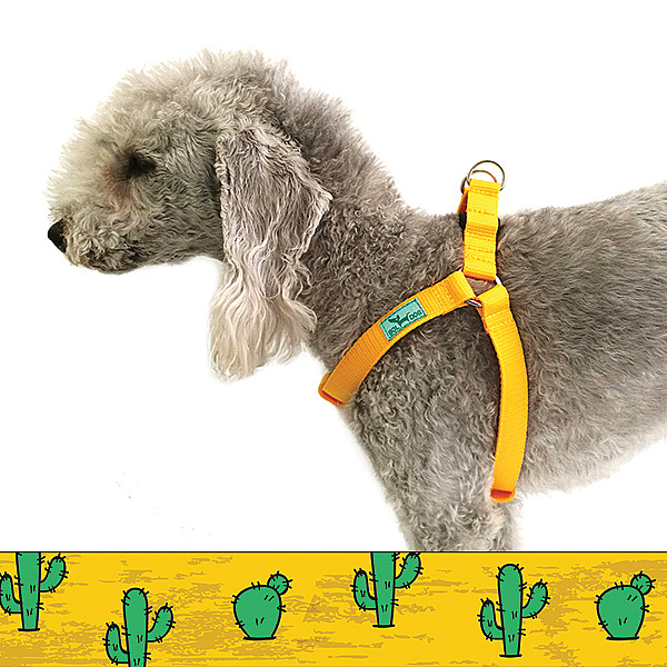 Cactus harness