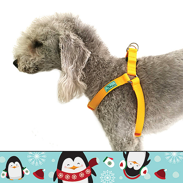 Icy penguin harness