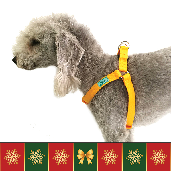 Occasion dog harness