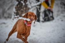 https://www.bol-dog.com/files/image/boldog_kutyak/gergelyszedoerzsi1_.jpg