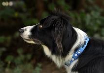 https://www.bol-dog.com/files/image/boldog_kutyak/kovacsesztertepesviana_.jpg