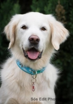 https://www.bol-dog.com/files/image/boldog_kutyak/novaktamaramaya.jpg